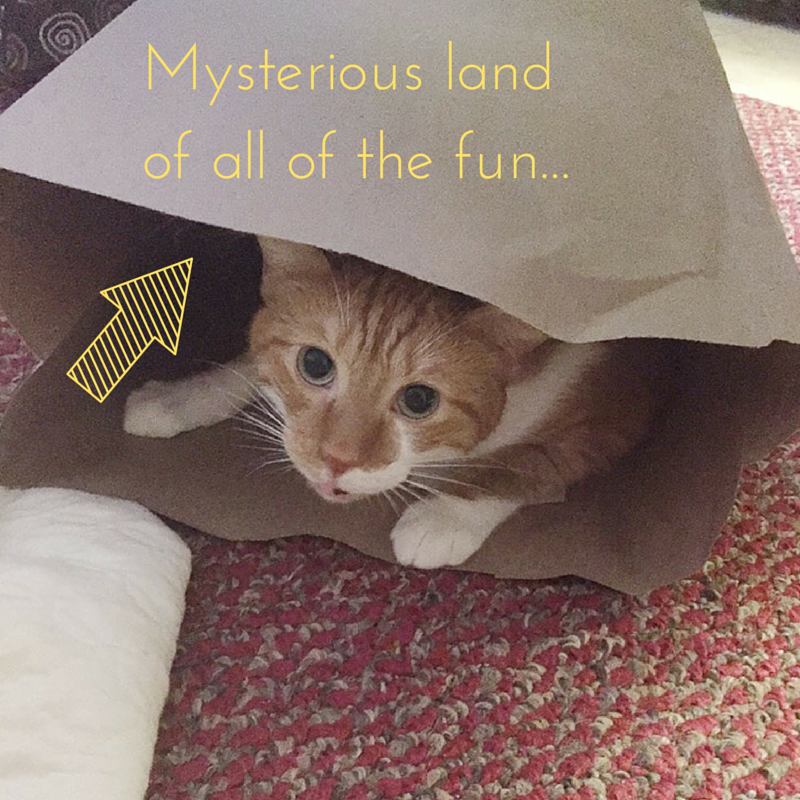 Mysterious Land Of All Of The Fun
