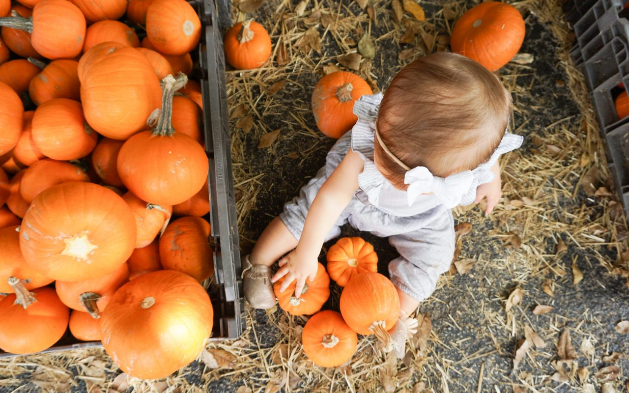 Pumpkin Patch Pictures – Baby's First Pumpkin Patch Visit