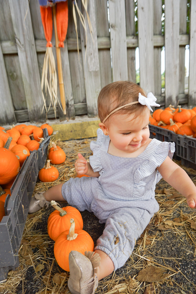 miami pumpkin patch photos