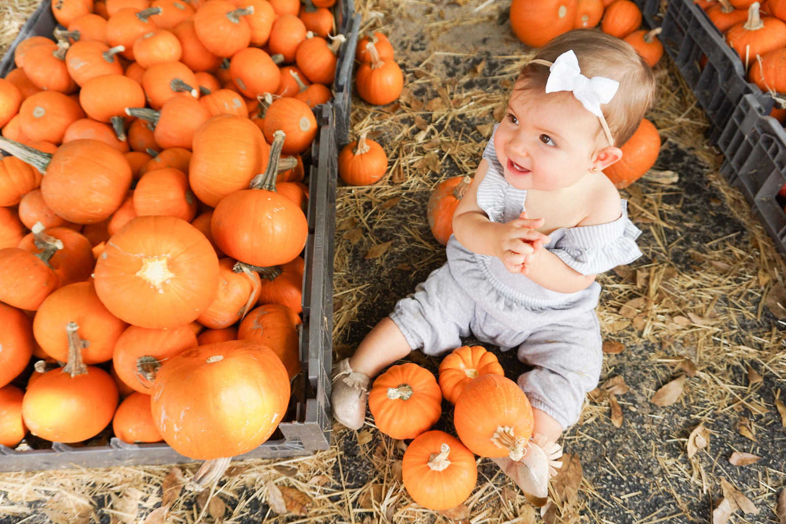 pumpkin patch pictures-3