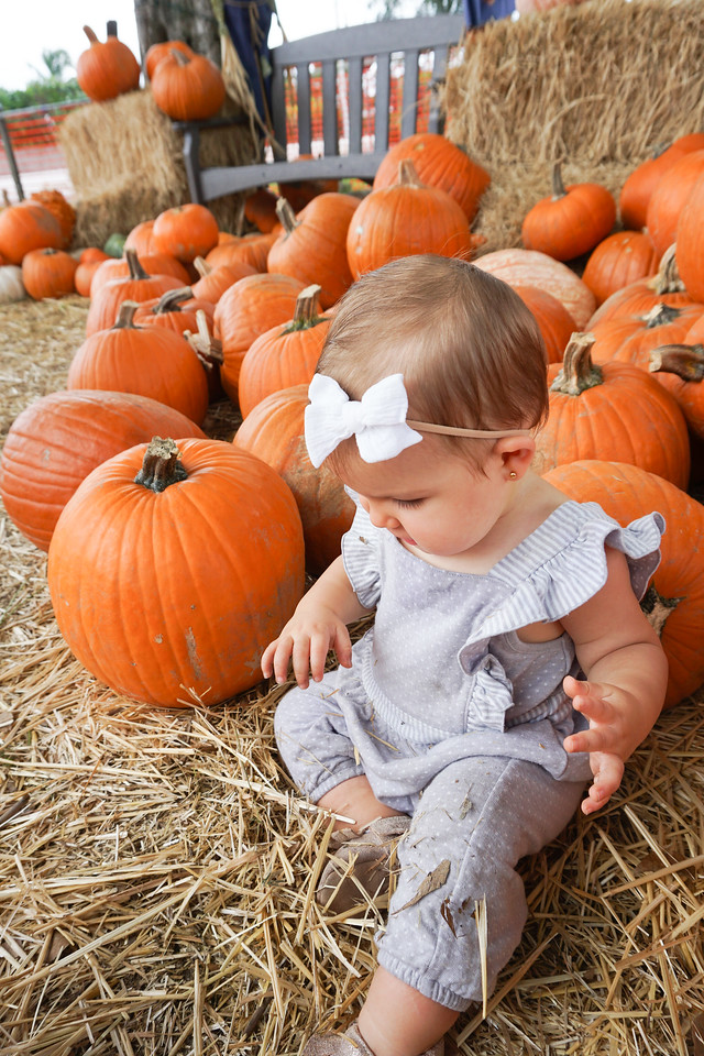 pumpkin patch pictures - cute pumpkin patch picture ideas